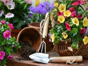 Giardinaggio (e toxoplasmosi) – [15+3]